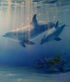 ציורי קיר במעמקי הים